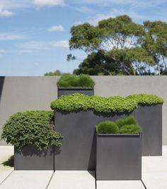 Green planting Conta