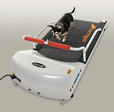 Treadmill for small dogs available at www.petpossibilities.com. Visit us for more choices. Don't forget to click save below to remember later.