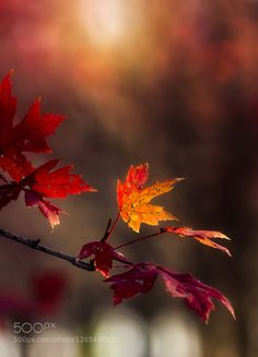 Autumn Glow by dananaylorwalker. Please Like http://fb.me/go4photos and Follow @go4fotos Thank You. :-)