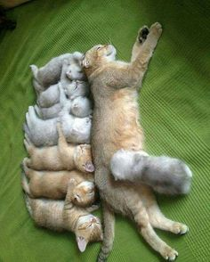 Oh my goodness... poor mummy! All those fur babies!