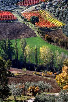 http://www.greeneratravel.com/ La Toscana in autunno indossa una livrea coloratissima e pulsante di vita.
