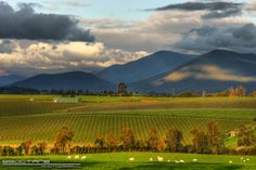 Yarra Valley, Australia - late afternoon