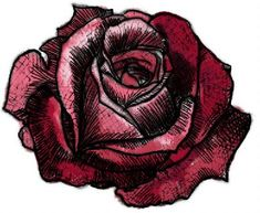 How to draw a rose #7