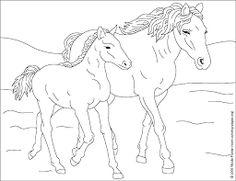 Coloriage Cheval Pour Adulte.58 Super Images De Coloriage Chevaux Beautiful Horses Coloring