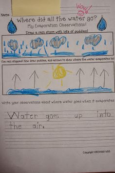 Kindergarten Science Evaporation- Freebie!