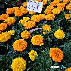 My favorite fragrant flower // Minnesota Landscape Arboretum Minnesota Landscaping, Landscaping Tips, Gelato Shop, Public Garden, Companion Planting, Marigold, Greenery, Fountain, Diy And Crafts