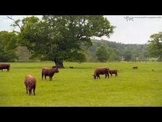 ☀Escape to the Country - 17 39 North Devon - YouTube