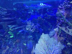 En el acuario imbursa
