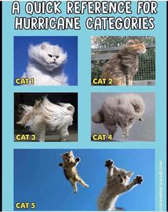 """Hurricane Dorian is on its way and while sane people fear a hurricane to """"Florida Man"""" for most it's just a reason to party. Funny Cats, Funny Animals, Cute Animals, Animal Jokes, Baby Animals, Laugh Till You Cry, What Cat, Science Memes, Cat 2"""