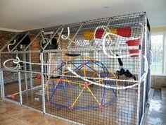 Monkey cage, pet capuchin monkey enclosure, primate care, enrichment, spider monkey toys