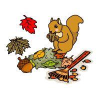 cute squirrel activities/movement