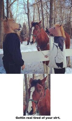 This horse has had enough of this.  #horse #prank #horsemask