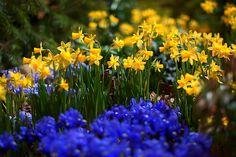 Spring In Winter - Explore, via Flickr.