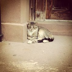 A guest cat on 22nd Street