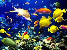 Tropical fish swimming over a coral reef..