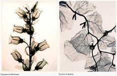 Judith McMillans flowers & plants: