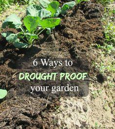 Anyone else's gardening like mine?