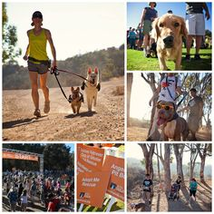 On Saturday evening, about 2,000 Los Angeles animal lovers and their 1,300 dogs came together for our twilight Strut Your Mutt event where they raised more than $609,000 for homeless pets! (Wow!)  Congratulations and our most sincere gratitude to all the participants, volunteers, sponsors, and the 40 benefitting local rescues who will put those funds straight to saving the lives of LA animals.