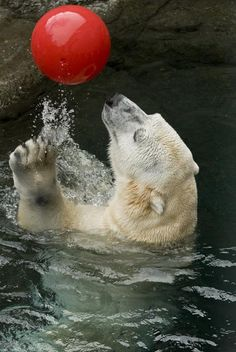 wild animal enrichment images | ... the air as part of animal enrichment at the Oregon Zoo. | Oregon Zoo