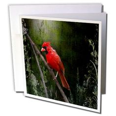 #Birds #Cardinal Bird in Spring - Art Home Decor - Greeting Cards-12 Greeting Cards with envelopes