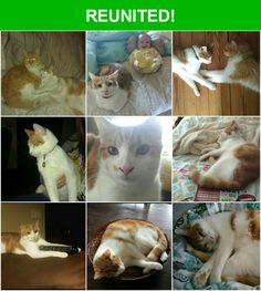 Great news! Happy to report that Lela has been reunited and is now home safe and sound! :)