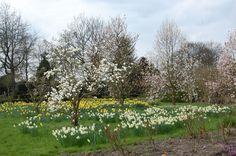Norddeutsche Gartenschau: Ein Blütenmeer aus Narzissen und Päonien