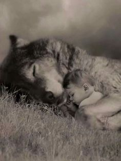 And if you want to understand how a true family works, study wolf packs and you'll learn all you need to know. Animals For Kids, Animals And Pets, Funny Animals, Cute Animals, Wolf Spirit, My Spirit Animal, Beautiful Creatures, Animals Beautiful, Illustration Fantasy