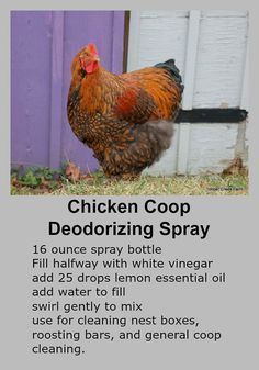 Building a Chicken Coop Homemade Chicken Coop Deodorizer Spray. Building a chicken coop does not have to be tricky nor does it have to set you back a ton of scratch. Chicken Coops Homemade, Portable Chicken Coop, Best Chicken Coop, Chicken Coop Plans, Building A Chicken Coop, Chicken Coup, Chicken Tractors, Fancy Chicken Coop, Small Chicken Coops