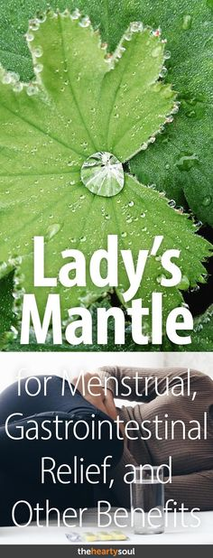 Lady's mantle — it's such an interesting name for an herb that has so many possible health benefits, especially for women. It can help with period cramps, menopause symptoms and can even protect the liver. Here is a thorough list of its benefits and an overview of the herb itself. #ladysmantle #menopause #periodcramps