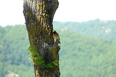 Onbekend vogeltje in Umbrie