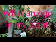 What an egg in my plant!