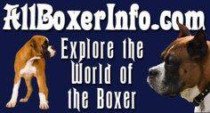 Boxer Dog Thyroid Problems   Hypothyroidism