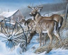 Kevin Daniel Snow Drifters Deer Buck Art Print 16 x 12 Wildlife Paintings, Wildlife Art, Animal Paintings, Oil Paintings, Wild Life, Deer Art, Moose Art, Minnesota, Illustration