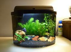 Custom Fish Tanks On Pinterest Fish Tanks Acrylic