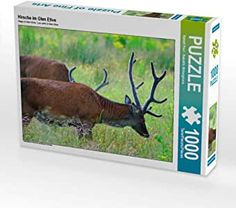 Hirsch in Schottland Glen Etive, Puzzle 1000, Moose Art, Animals, Products, Pictures, Scottish Highlands, Majestic Animals, Young Adults