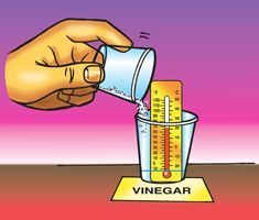 A teacher adds baking soda to a cup containing vinegar and a small thermometer