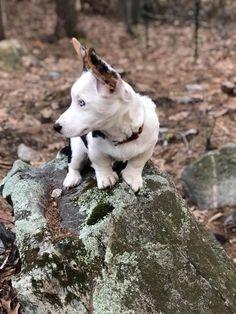 Merlin the Mountain Climber https://i.redd.it/j8hypo1ka6j01.jpg