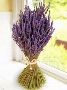 LAVENDER is beautiful, fragrant and tasty. Indoors or out, lavender is a natural bug repellent, hated by fleas