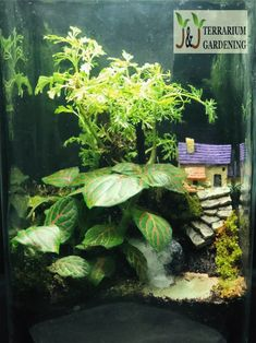 J&J Terrarium Gardening provides exclusive terrarium designs with water features be it fake or real, terrarium with lightings, open and closed type terrarium. Customization available upon request. Terrariums, Water Features, Gardening, Lights, Type, Wood, Plants, Design, Water Sources