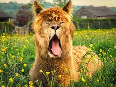 Eng realistisch gephotoshopte dieren! - Manify.nl | Manify Yourself!