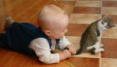 The 3 Best Ways Ever to Get Hired- Kittens and Babies Edition