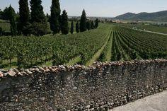 Franciacorta, Brescia, Italia.  Land of Franciacorta Spumante!