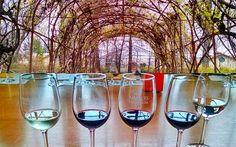 Concha y Toro: Como visitar a vinícola saindo de Santiago