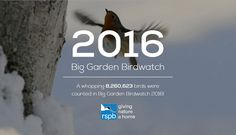 The #BigGardenBirdwatch results are in! Find out which species made the top ten.