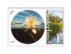 Flora en Fauna van het Naardermeer
