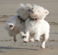 Romping in the sand!