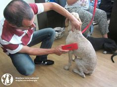 Donated microchipping scanner in action at #Tbilisi shelter.