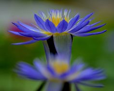outdoormagic: bleu en été par Giovanni88Ant