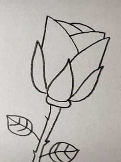 Rose Drawing Discover Drawing Rose Easy with A Pencil Easy Pencil Drawings, Space Drawings, Cute Easy Drawings, Art Drawings For Kids, Art Drawings Sketches Simple, Doodle Drawings, Drawing Ideas, Disney Drawings, Easy Drawings Of Animals