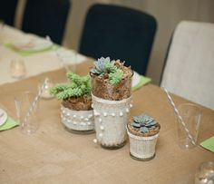 How to grow succulents in a jar by Elisa McLaughlin